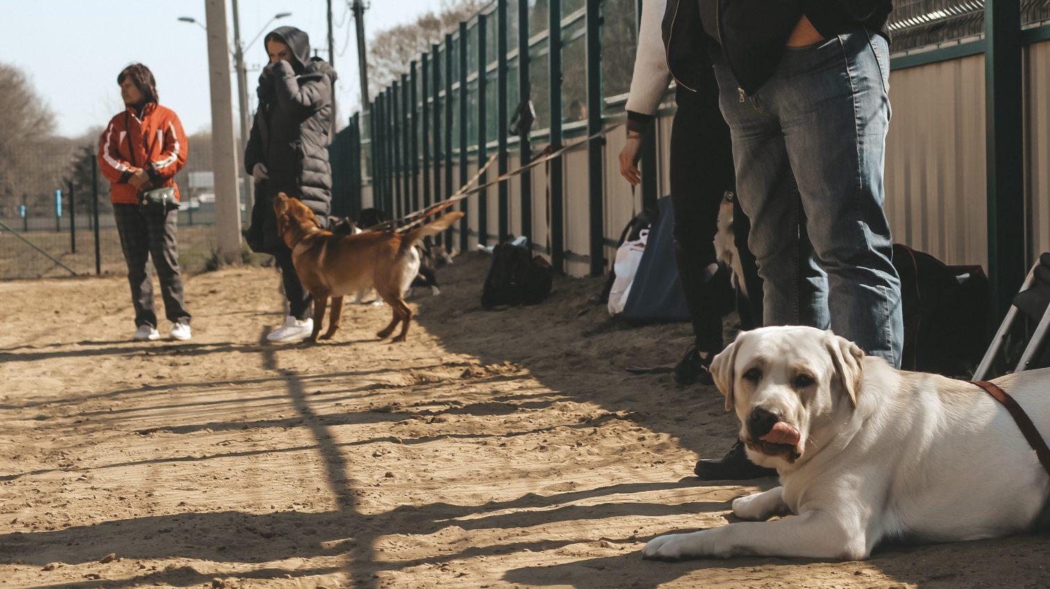 Скандальный собачий городок на 411 батарее открыли и проводят первые тренировки (фото, видео) «фото»