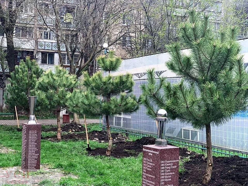 В Одессе появились аллеи сирени и сосен (фото) «фото»