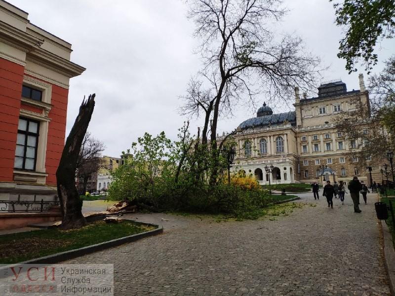 Возле одесской мэрии рухнуло дерево (фото) «фото»