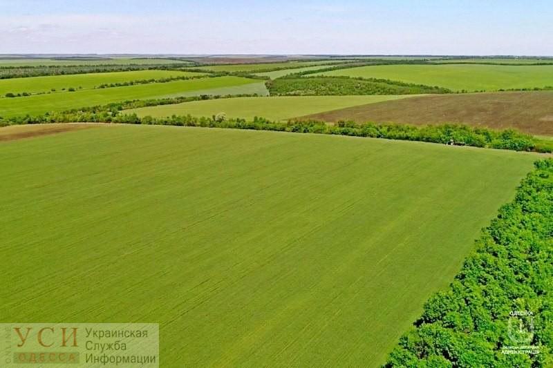 Зерновыми засеяли 200 тысяч гектаров полей Одесской области «фото»