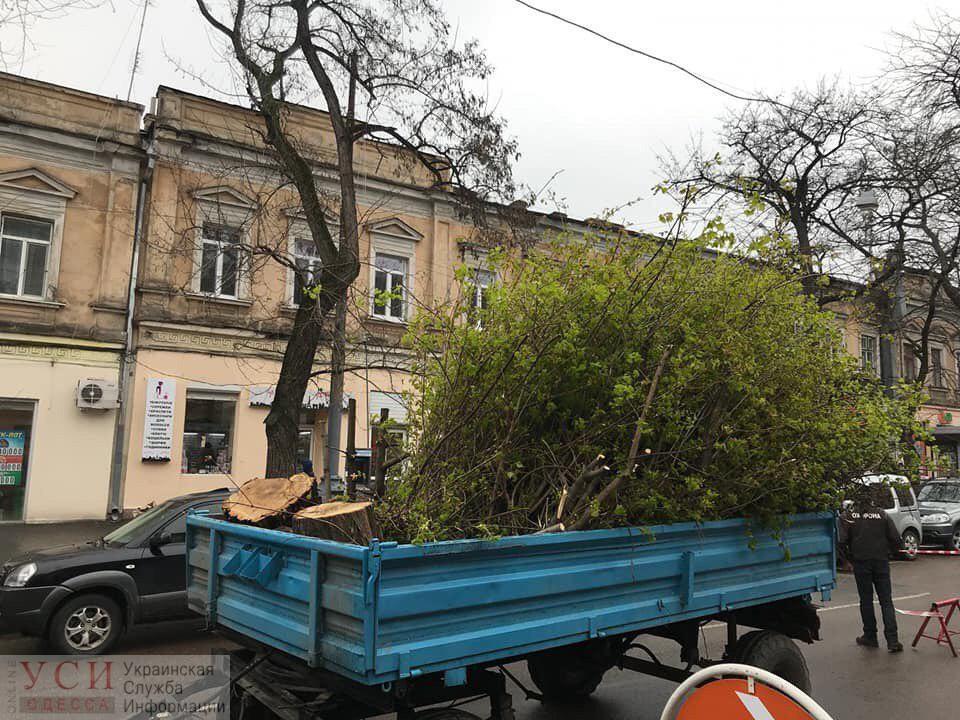 Возле Нового рынка массово спилили деревья (фото, видео) «фото»