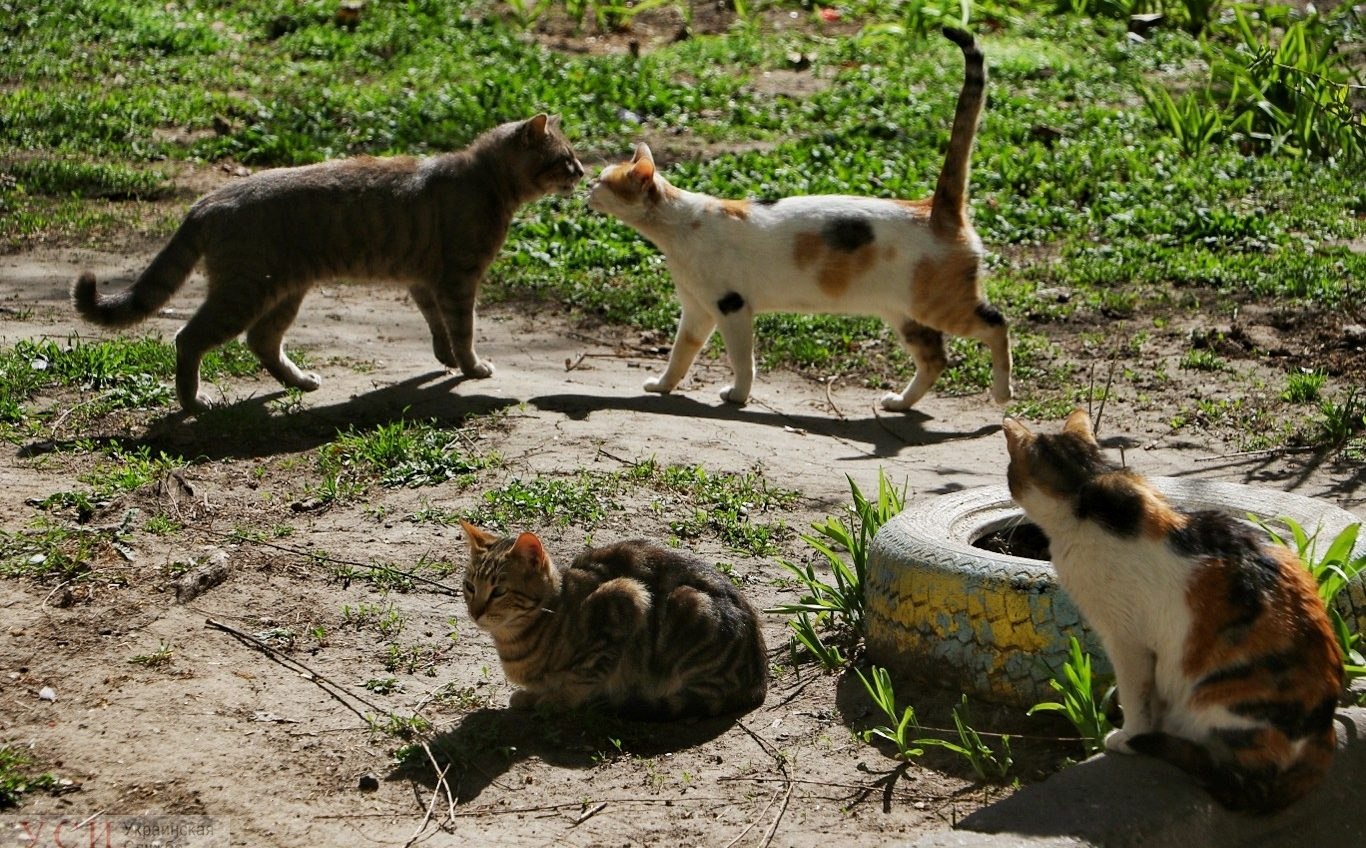 Одесские коты вышли греться под весенними лучами солнца (фоторепортаж) «фото»