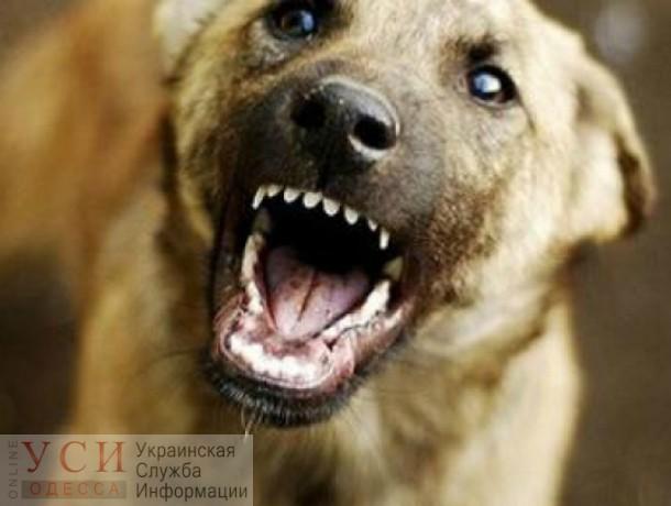 Одесситка, которую укусила собака, судится с ее хозяином, он свою вину не признает (фото 18+) «фото»
