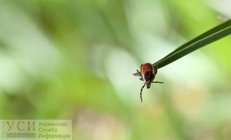 Маленький, но страшный: какие инфекции переносят клещи и нужно ли вакцинироваться в сезон (видео) «фото»