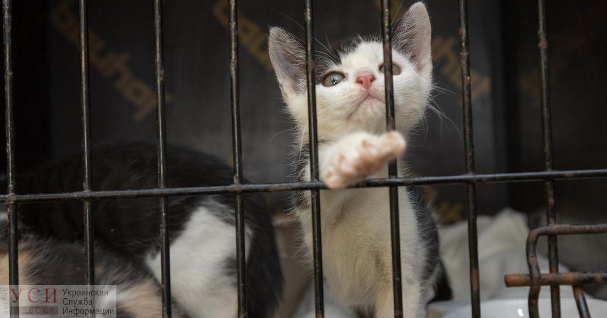 Одесская «Староконка» – торговля котятами-«смертниками» и другим животными (фото, видео) «фото»