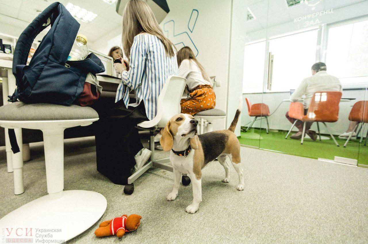«Возьми собаку на работу»: в пятницу пройдет всеукраинская акция для четверолапых и их хозяев (фото) «фото»