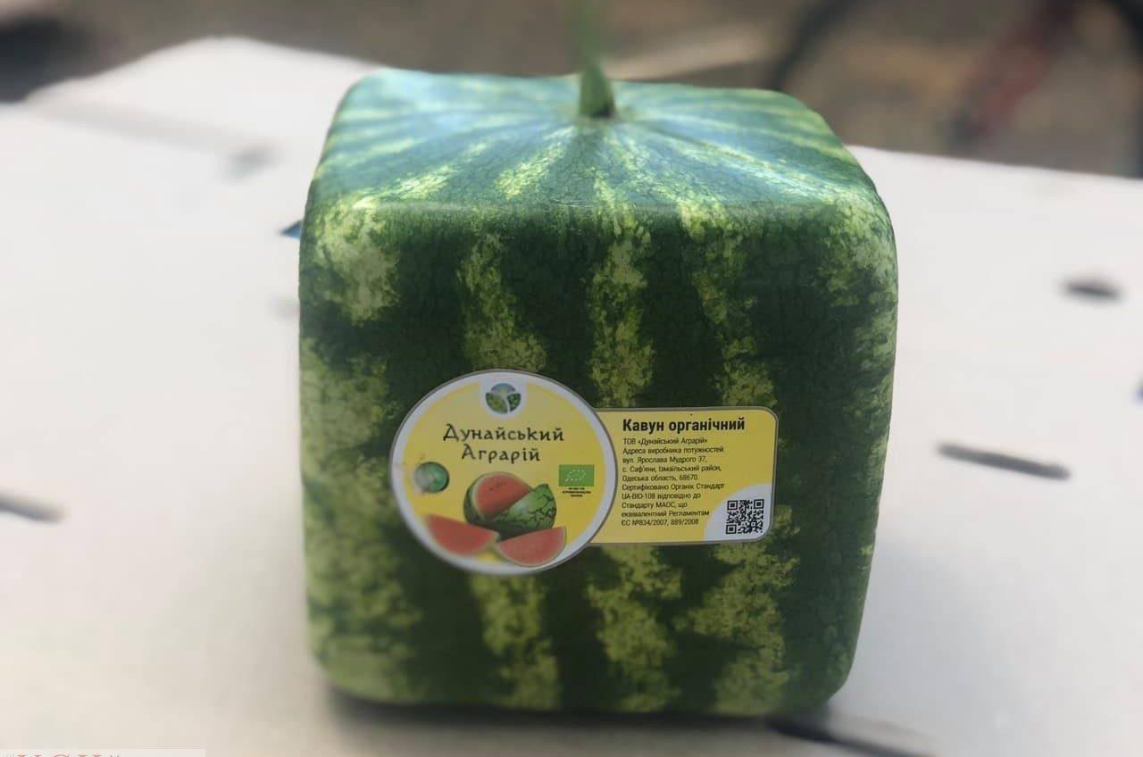 В Измаильском районе выращивают квадратные арбузы (фото) «фото»