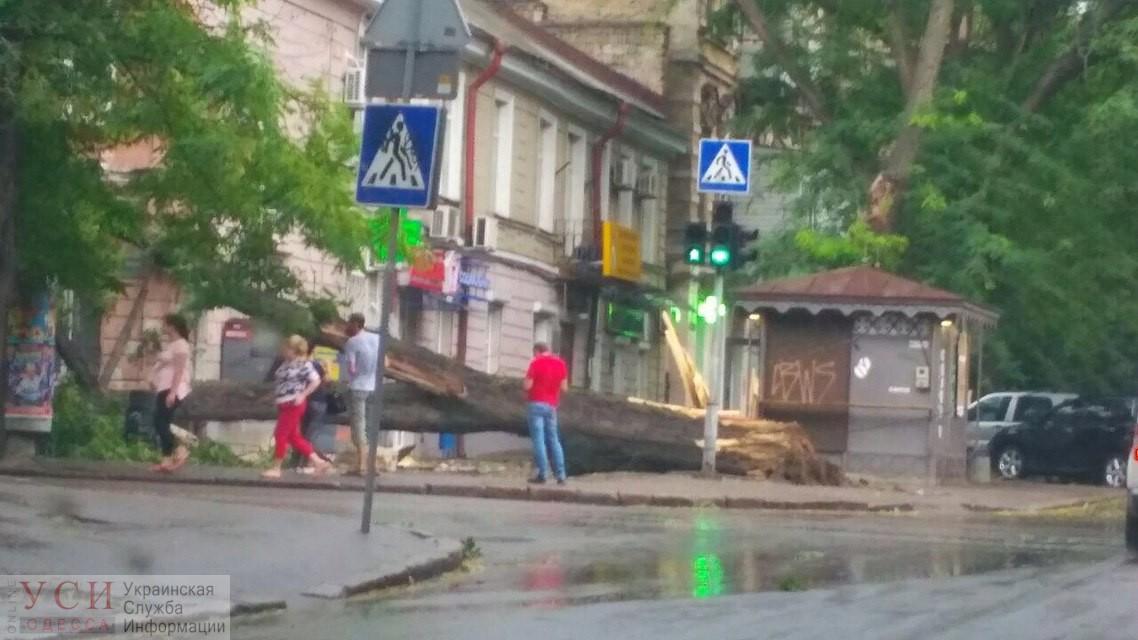 Шквальный ветер повалил несколько деревьев в Одессе (фото) «фото»