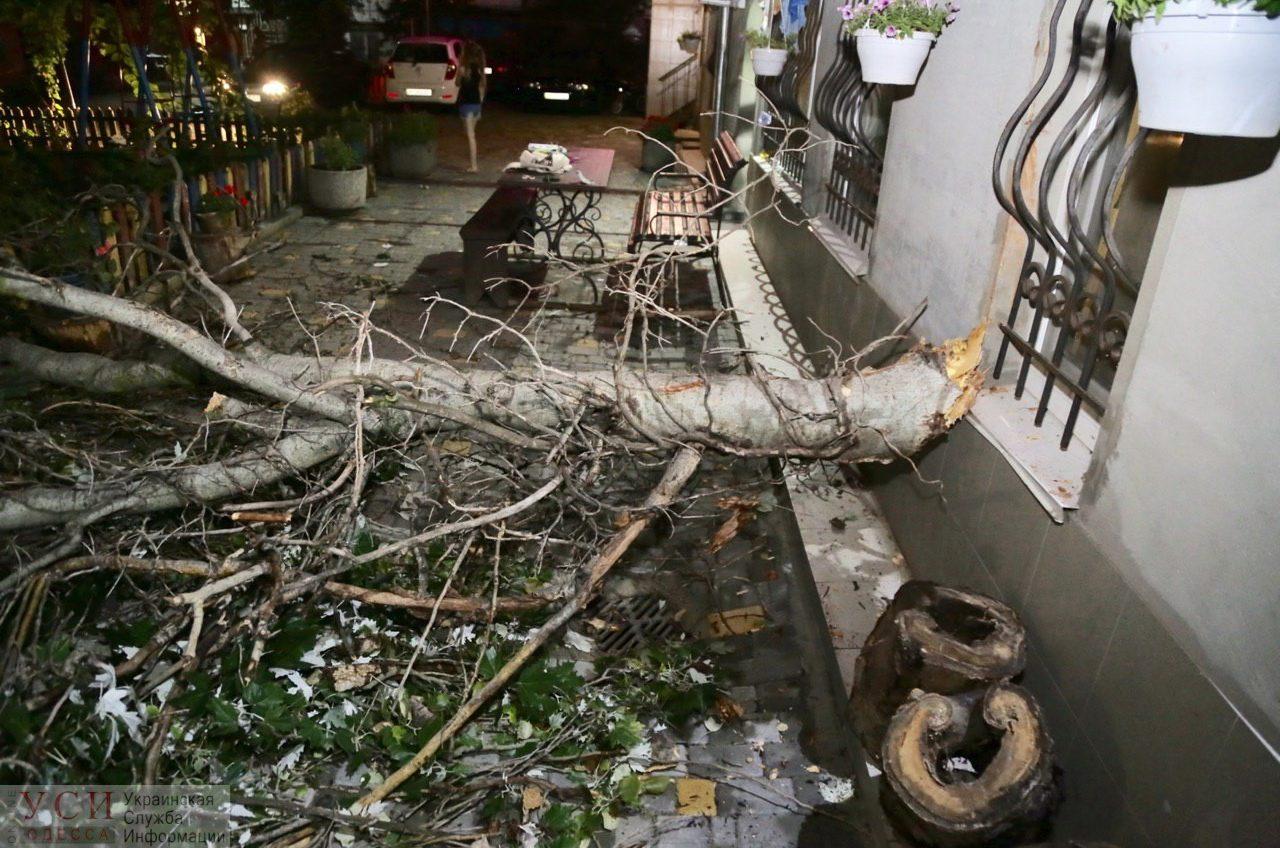 Старый тополь рухнул во дворе в центре Одессы и чуть не задел двоих детей (фото, видео) «фото»