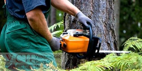 Предпринимателя будут судить за самовольное строительство лесопилки в Овидиопольском районе «фото»