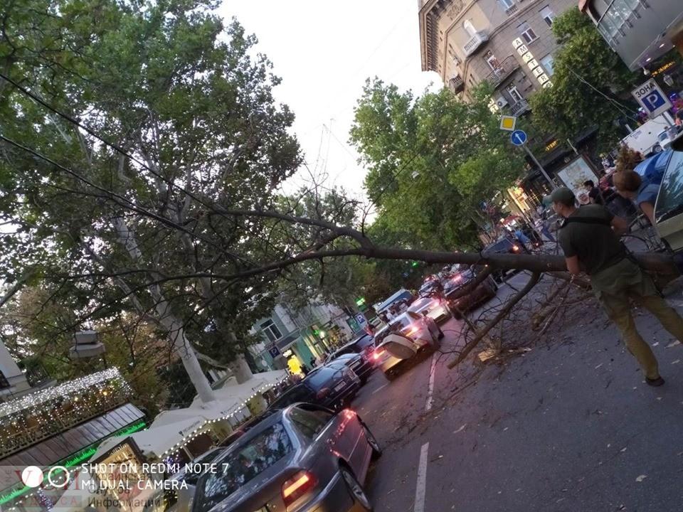 В центре Одессы упавшая ветка оборвала электропровода и заблокировала движение (фото) «фото»