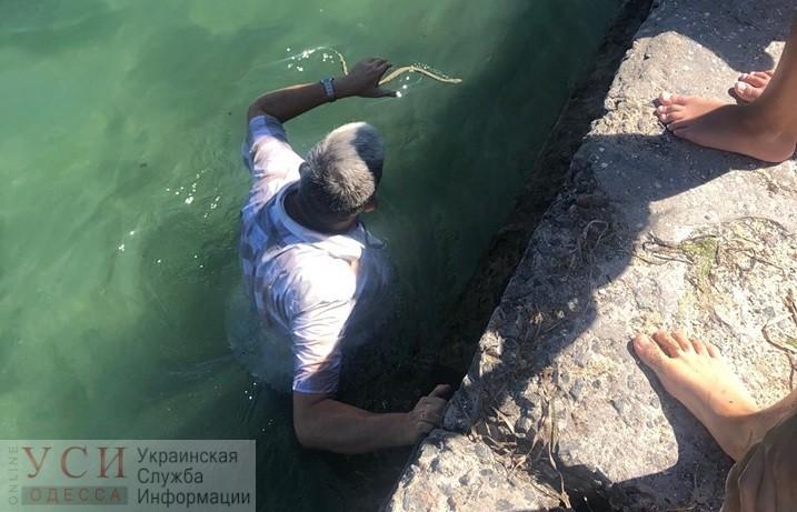 Директор Одесского зоопарка нырнул в море за змеей на 15-й станции Фонтана (фото) «фото»