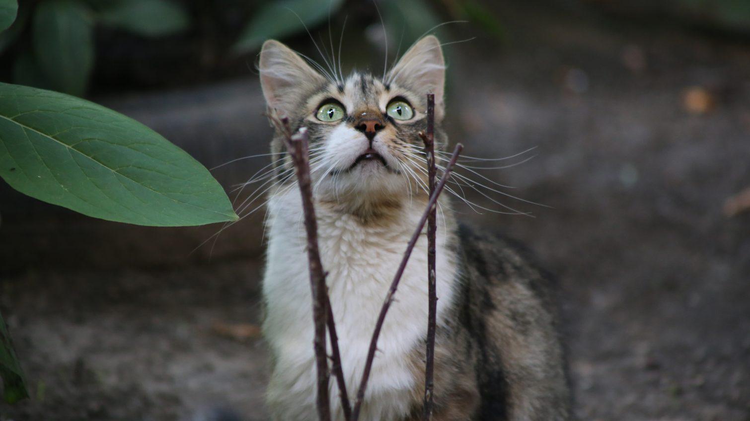 Всемирный день котов: чем живут одесские четырехлапые (фото, видео) «фото»