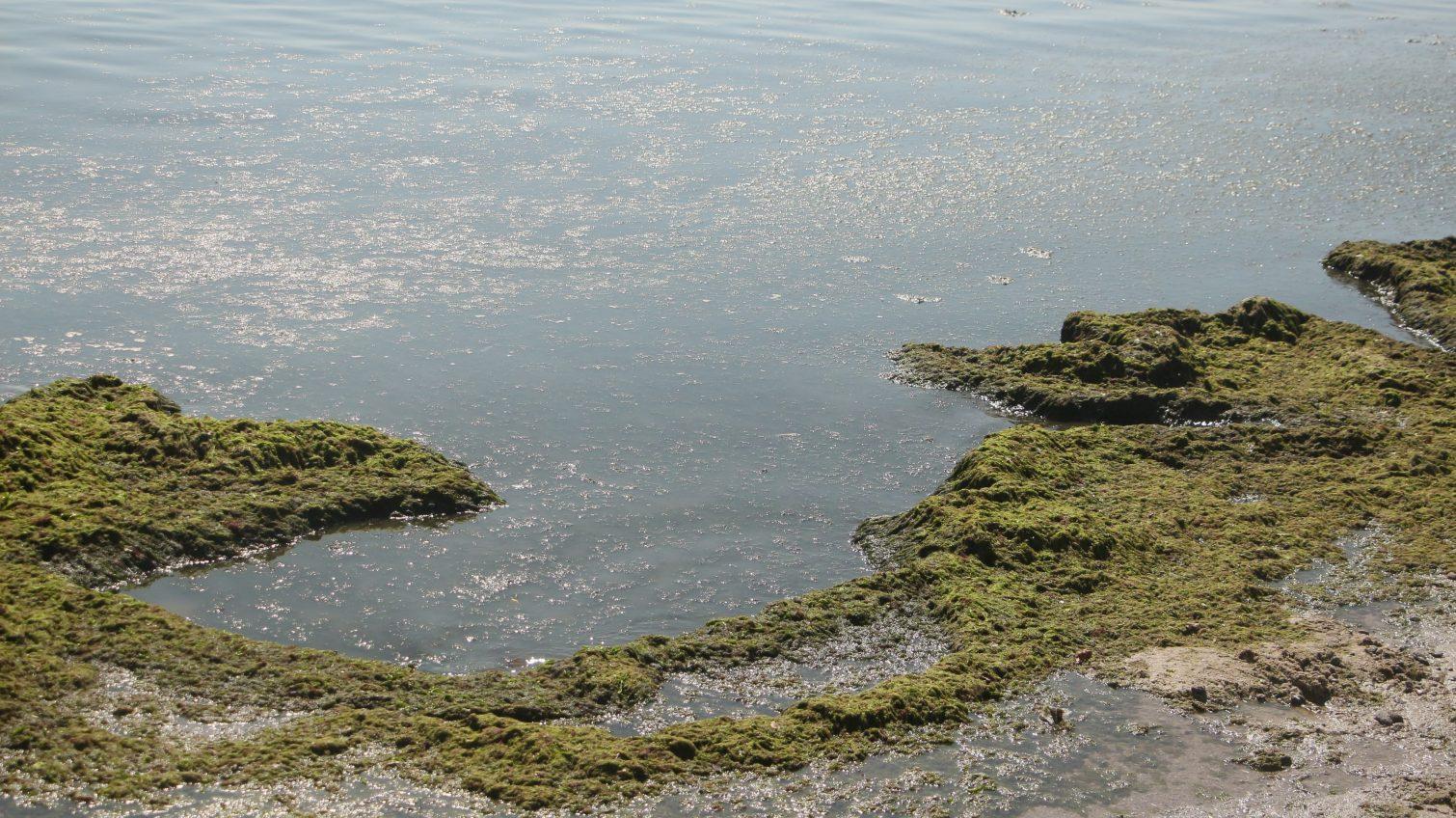 «Аркадия» и «Лузановка» признаны наиболее грязными пляжами Одессы (фото) «фото»