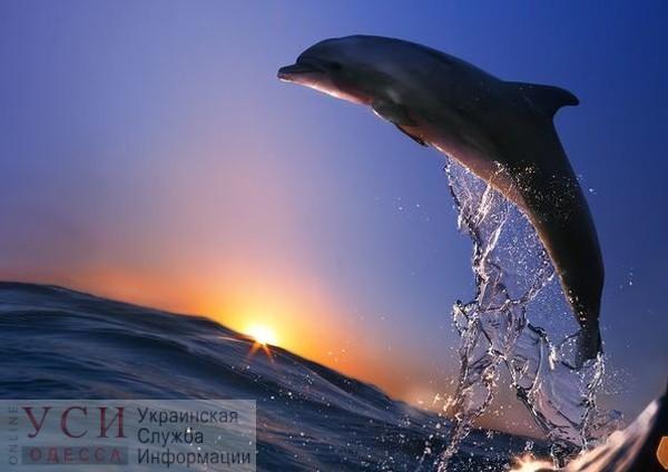 Возле одесского пляжа заметили дельфинов (видео) «фото»