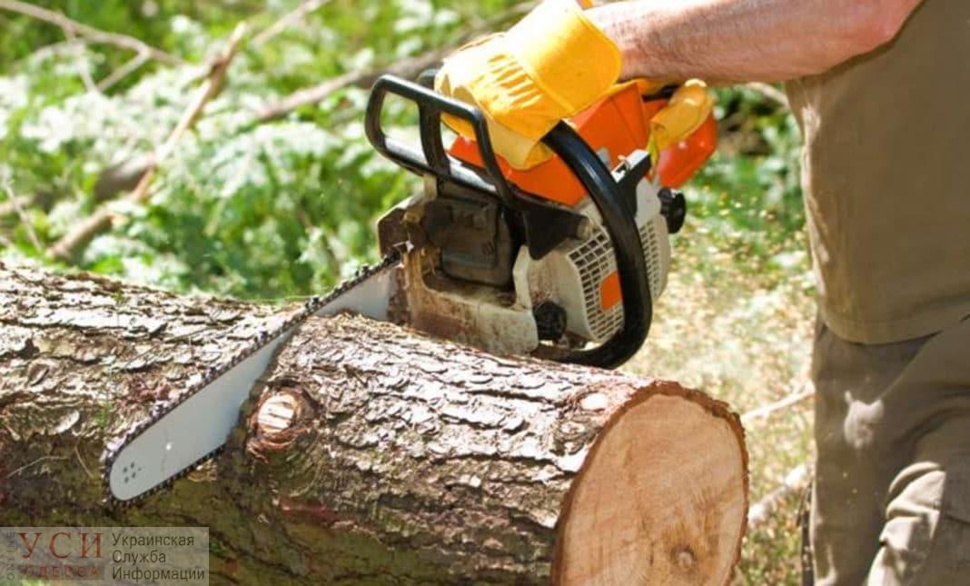 Одесские чиновники с апреля не могут найти рабочих, которые вырубили деревья у супермаркета на Канатной «фото»