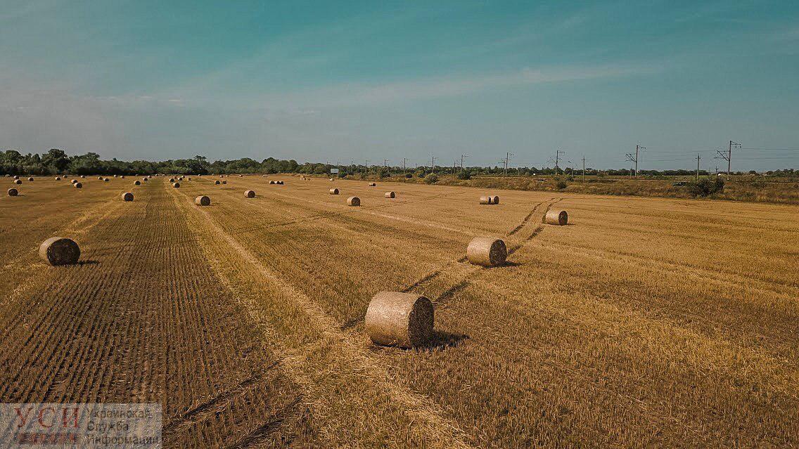 Сбор урожая: красоты золотых полей Одесской области (фото, видео) «фото»