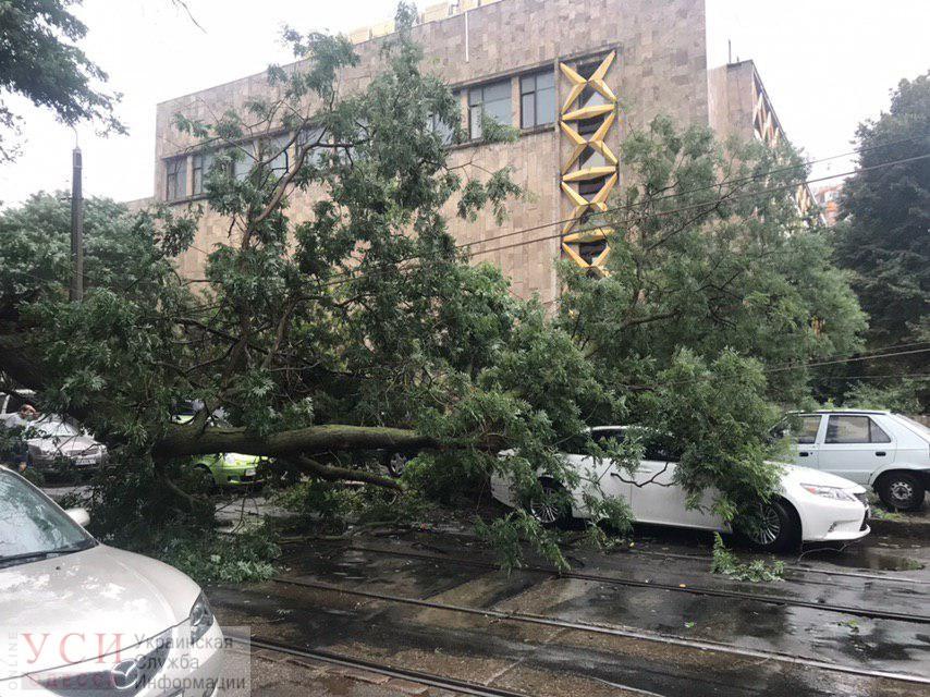 В Одессе ураганный ветер повалил 14 деревьев (фото) «фото»
