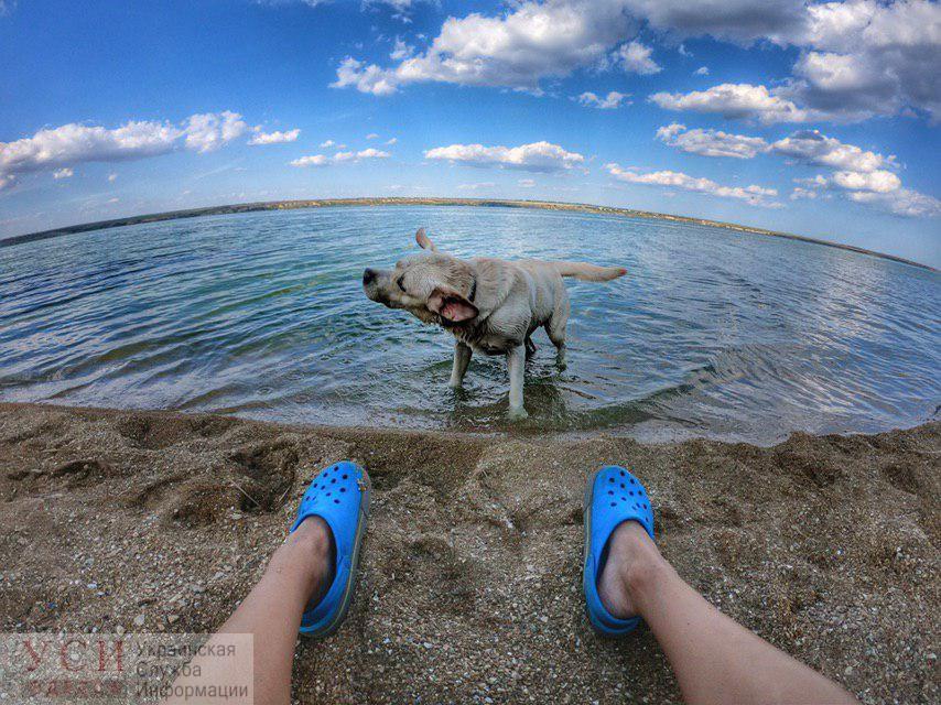 Середина недели в Одессе будет жаркой и безоблачной «фото»