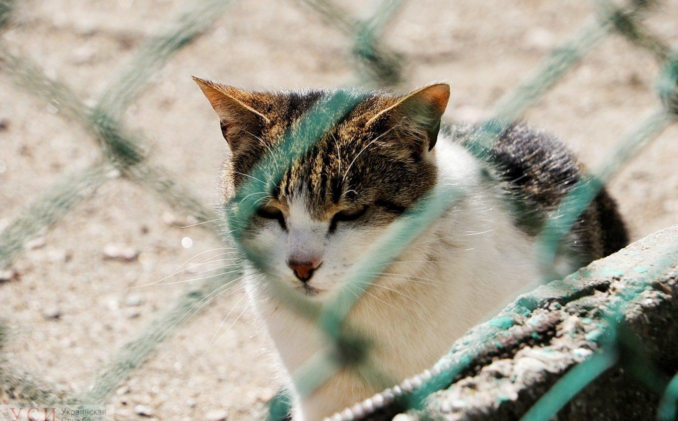 Стрельба из-за кота: словесная перепалка переросла в вооруженный конфликт в Одессе «фото»