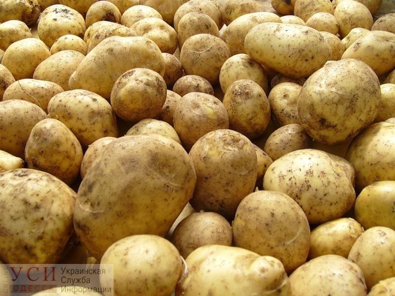 Украинская картошка подорожала до рекордного уровня и стоит дороже, чем в соседних странах «фото»