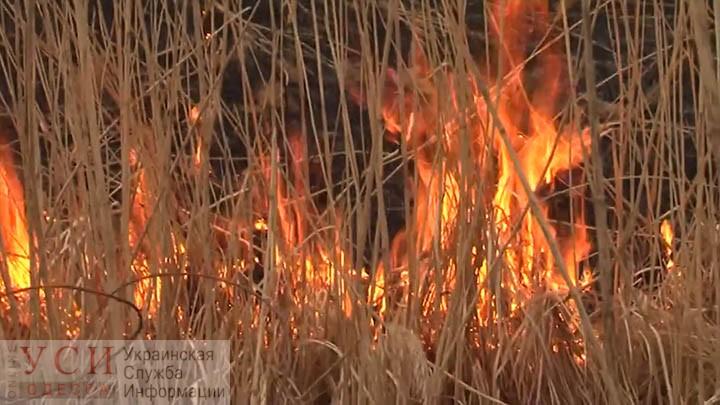 Масштабный пожар разгорелся в районе Хаджибейского лимана (видео) «фото»