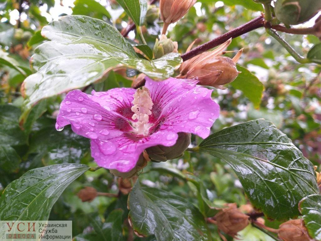 Одесситам обещают дождливую, но теплую погоду «фото»