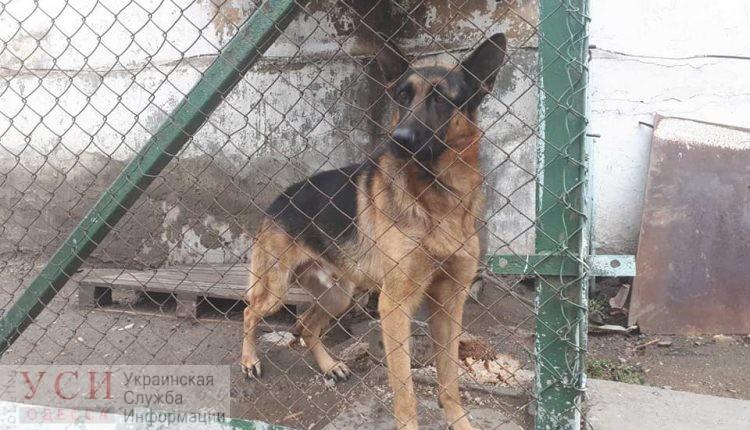 «Главное, чтобы не пристрелили»: защитники животных переживают за судьбу собак из расформированной одесской колонии «фото»
