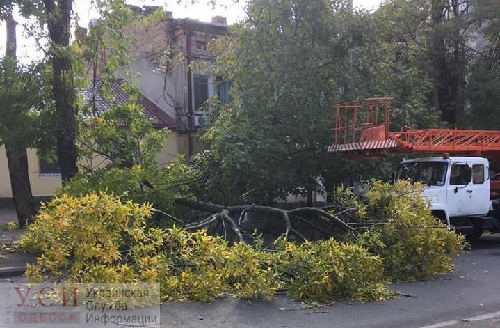 Сильный ветер повалил в Одессе деревья в разных районах города «фото»