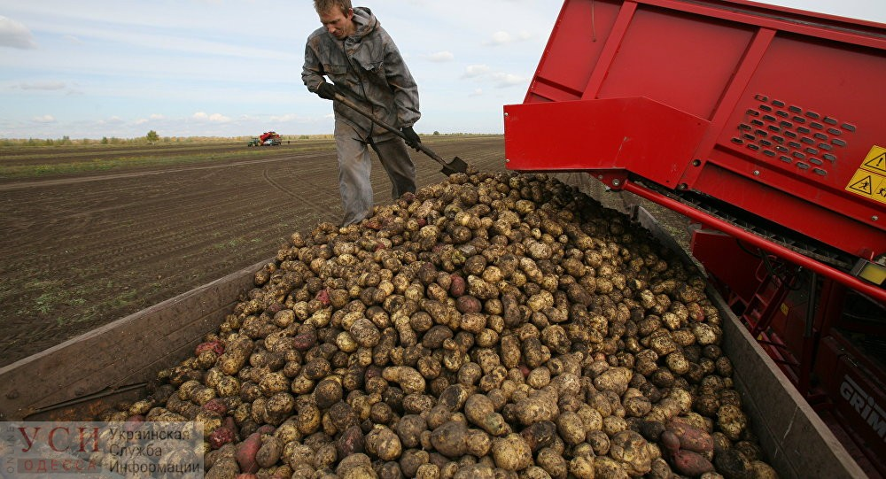 Помощь фермерам: в Украине разрабатывают систему страхования урожая «фото»