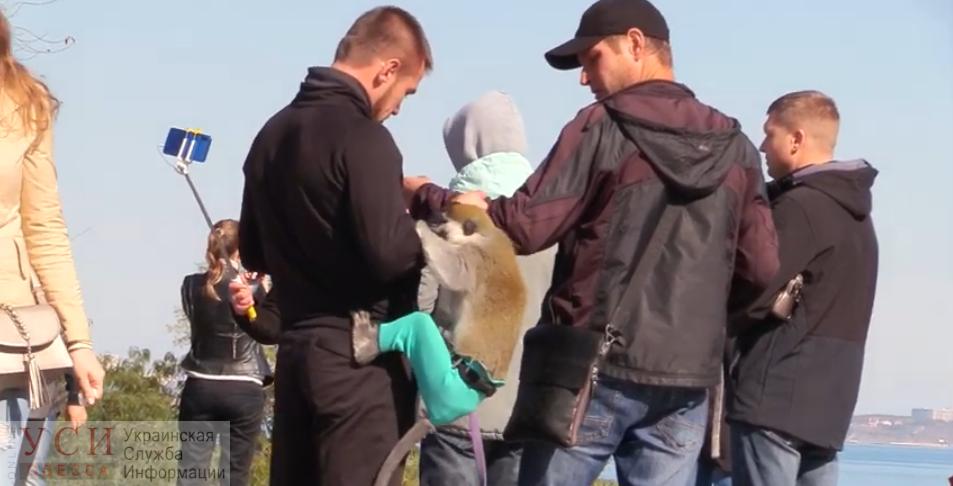 Эксплуатация животных на Приморском продолжается: обезьянка-«фотомодель» начала нервничать и покусала своего владельца (видео) «фото»
