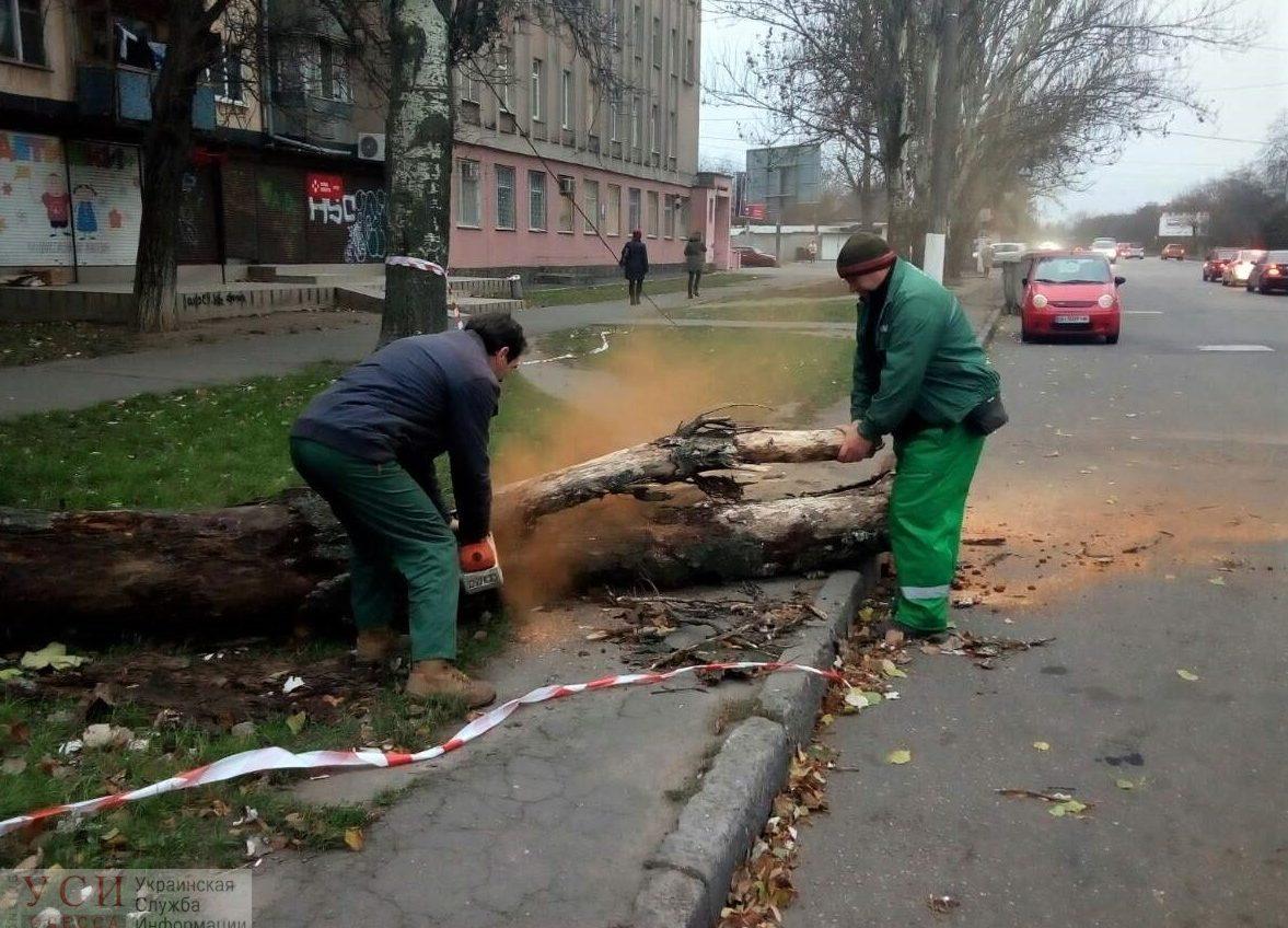 Последствия непогоды: за сутки в Одессе ветер повалил 24 дерева и оборвал провода в 10 местах (фото) «фото»