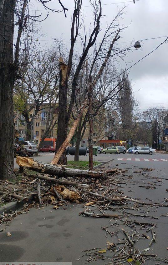Штормовой ветер валит деревья по Одессе (фото) «фото»