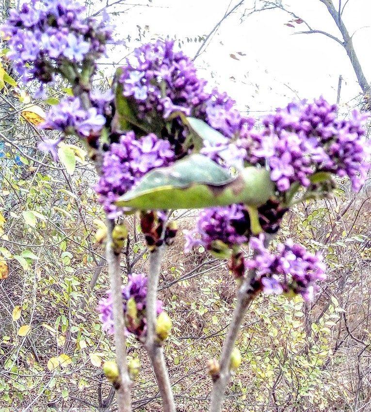 В Одесской области в заповеднике зацвели первоцветы и сирень «фото»