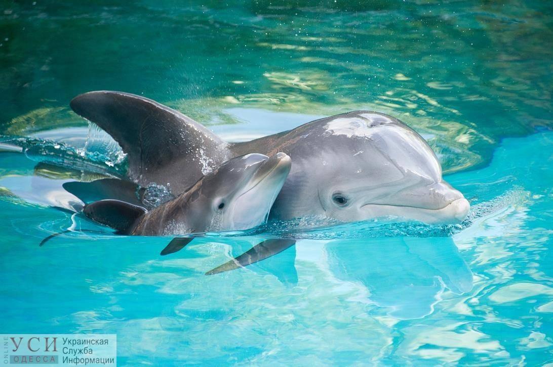 Дельфинарии в Украине могут запретить: разработан законопроект, в который также могут включить запрет на попрошайничество и фото с животными «фото»