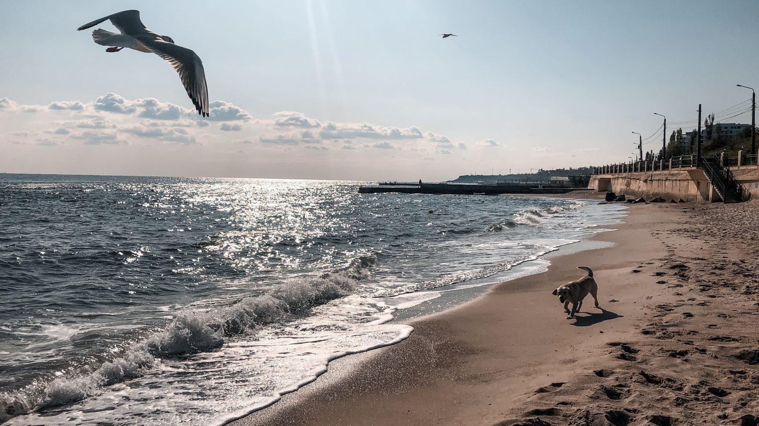 Четверг в Одессе будет малооблачным и теплым «фото»