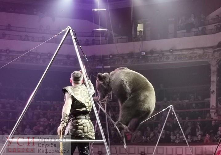 В обход решения суда в цирке Одессы продолжают эксплуатировать диких животных (видео) «фото»
