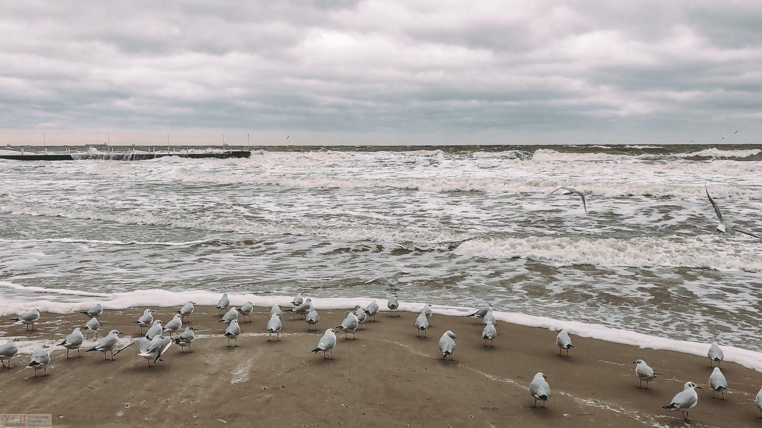 Среда в Одессе будет облачной, в области обещают мороз и гололед «фото»