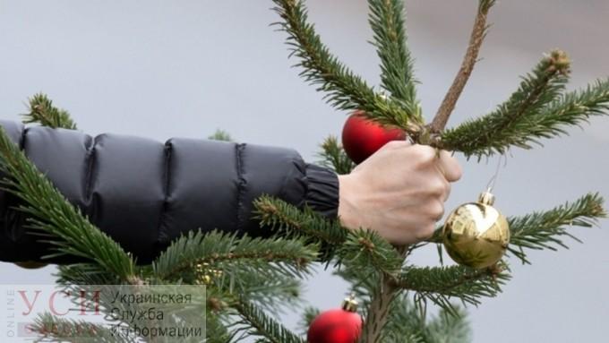 «Сладкая альтернатива»: одесские коммунальщики будут давать конфеты за елки, выброшенные в «правильных» местах (видео) «фото»