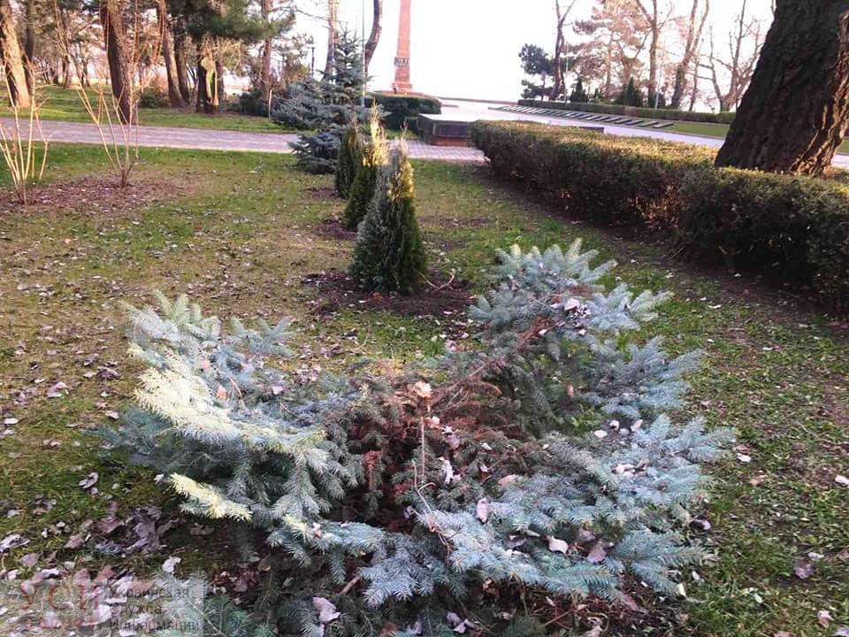 Новогоднее преступление: в Одессе похитили две елки и кедры, похитителей сняла камера наблюдения (фото, видео) «фото»