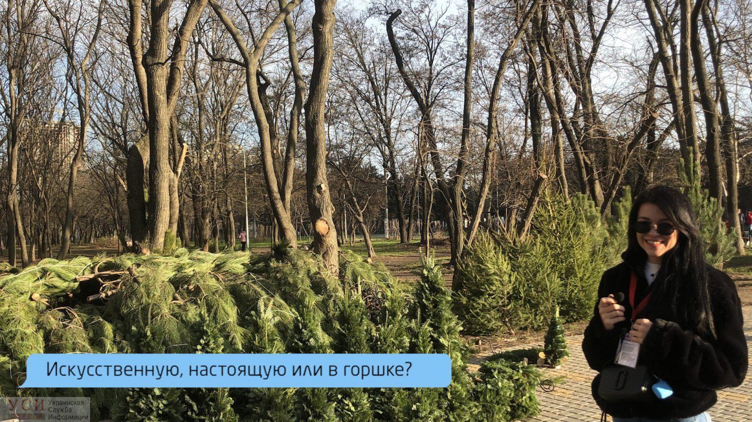«Я с прошлого года не выкидывал елку», — одесситы определились с выбором новогодней красавицы (видео) «фото»