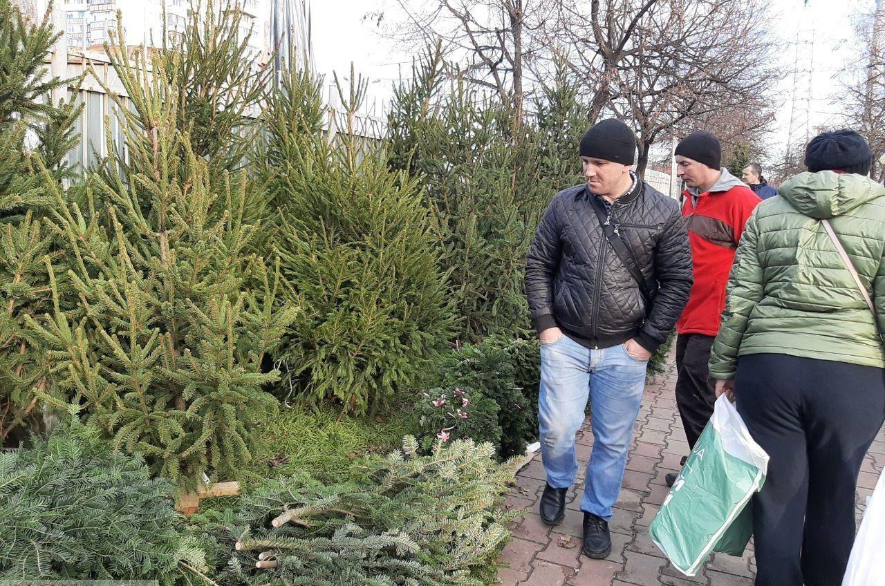 Началось: одесские улицы наводнили елки (фото) «фото»