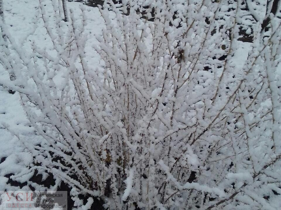Под Одессой выпал предновогодний снег (фото) «фото»
