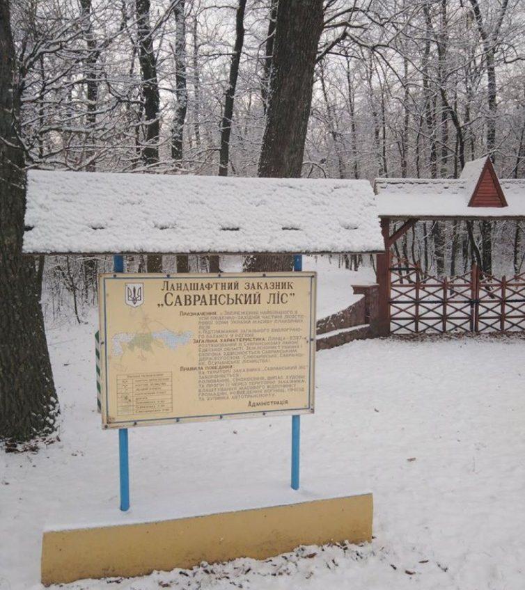 Первый снег: в Одесской области снег засыпал Савранский лес, полиция призывает к осторожности (фото) «фото»