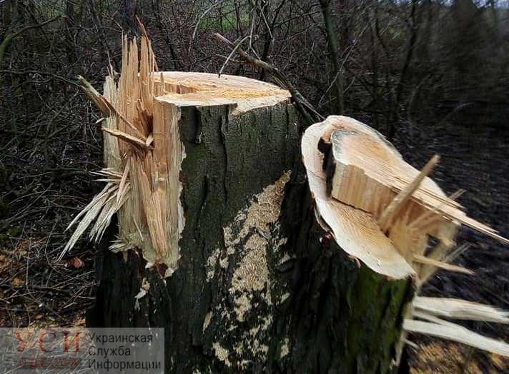 Под Одессой браконьеры незаконно вырубили многолетние деревья (фото) «фото»