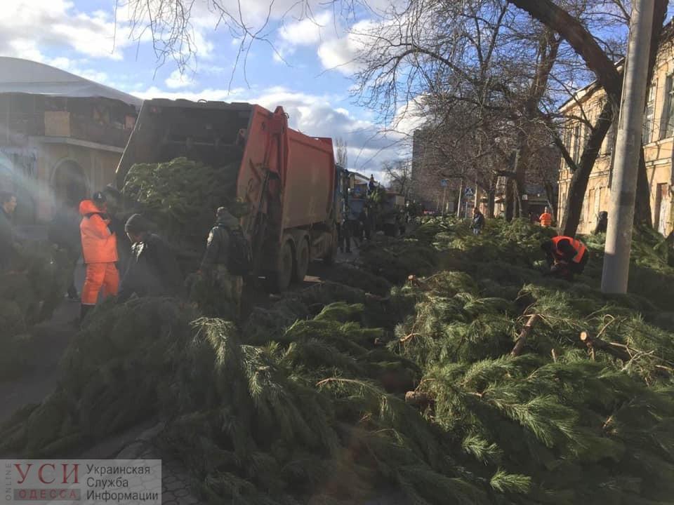 Непроданные елки, заполонившие Одессу, отправят на переработку (фото) «фото»
