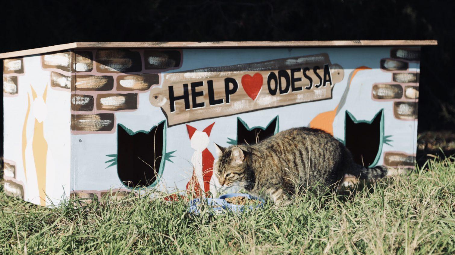 В Одессе волонтеры бесплатно мастерят и устанавливают домики для котов (фото) «фото»