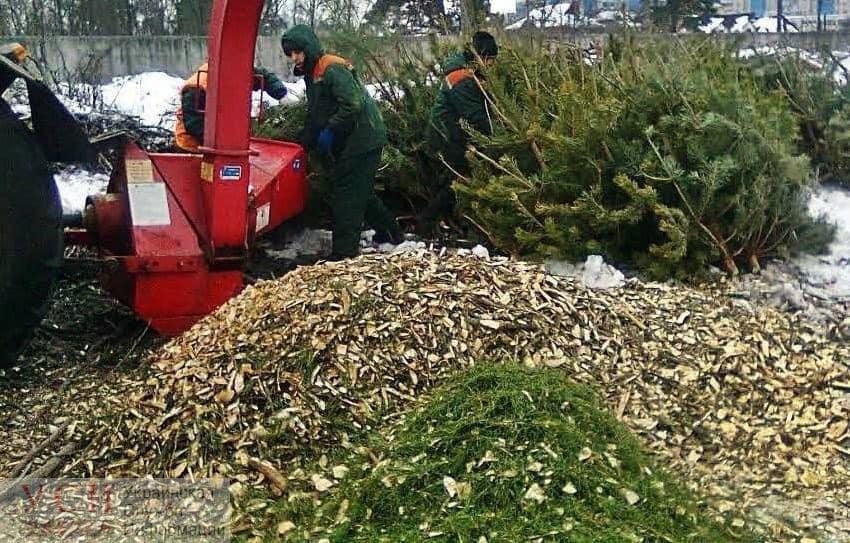 В Одессе переработали первые елки после новогодних праздников (фото, видео) «фото»