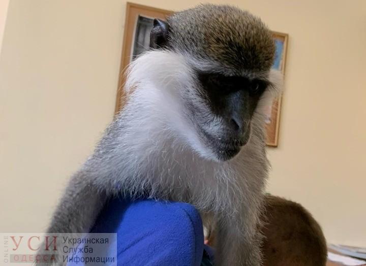 Возле Дюка продолжают эксплуатировать животных, несмотря на запрет «фото»