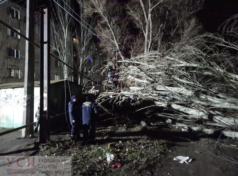 В новогоднюю ночь дерево рухнуло и перебило газовую трубу на Пересыпи (фото) «фото»